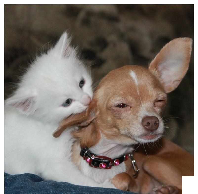 hund+katt