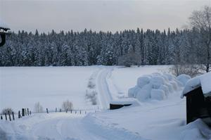 vinterbild-3
