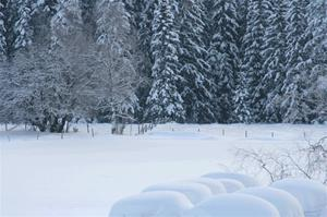 Vinterbild-2