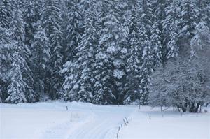Vinter i Jorstorp