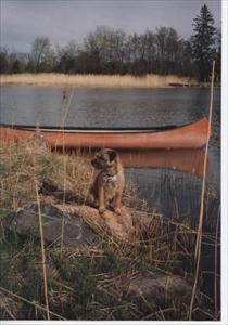 Davy vid vattnet