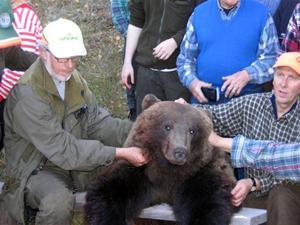 42. Förmodligen den första björnen som är fälld i Bursiljum
