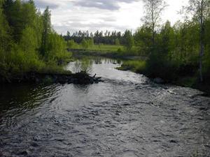 Sommar i Bursiljum028
