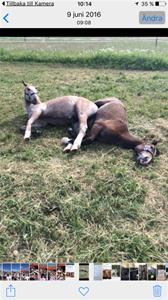 Bellus & Toby