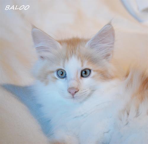 Baloo 10v