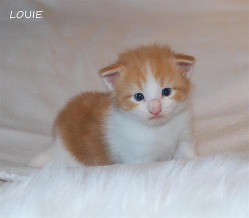 Louie 3v