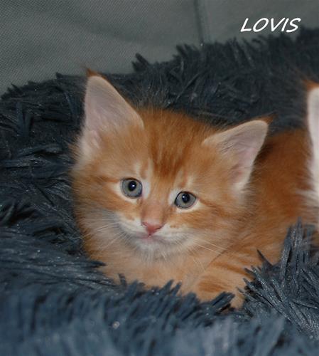 Lovis 6v c