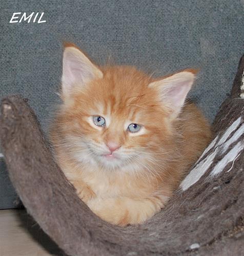 Emil 5v b