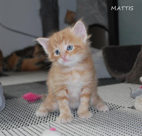 Mattis 4v