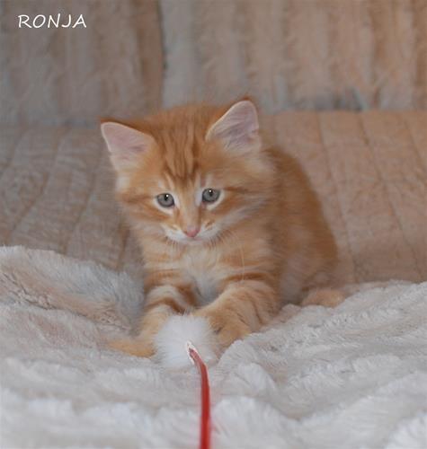 Ronja 7+4 b