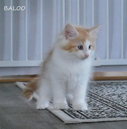 Baloo 8v c