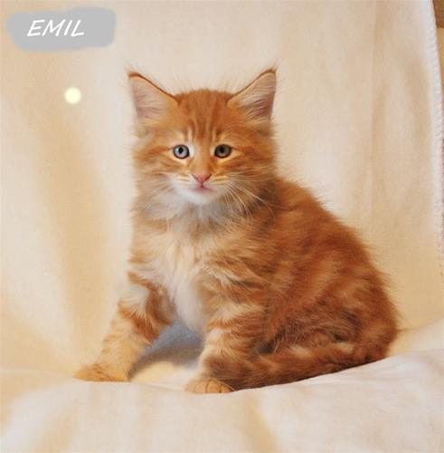 Emil 7v e