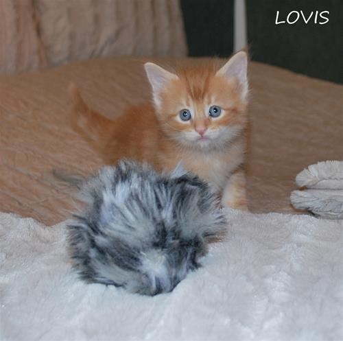Lovis 5v