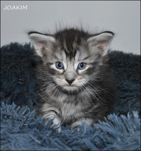 Joakim 4v