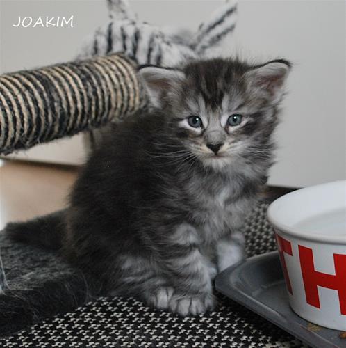 Joakim 4v a