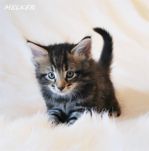 Melker 5v
