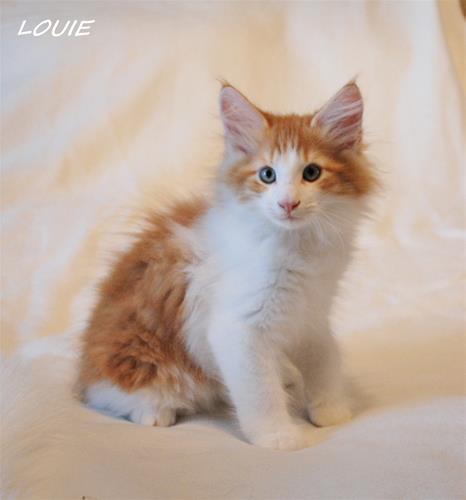 Louie 11v c