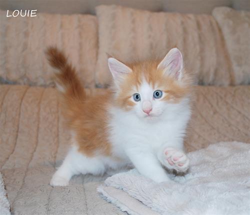 Louie 7v b