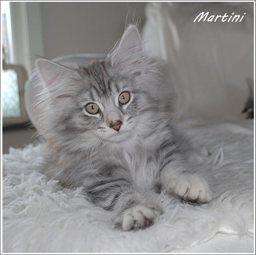 Martini 11v b