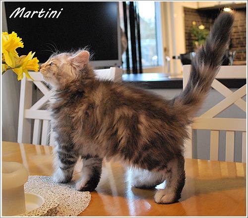 Martini 10v a