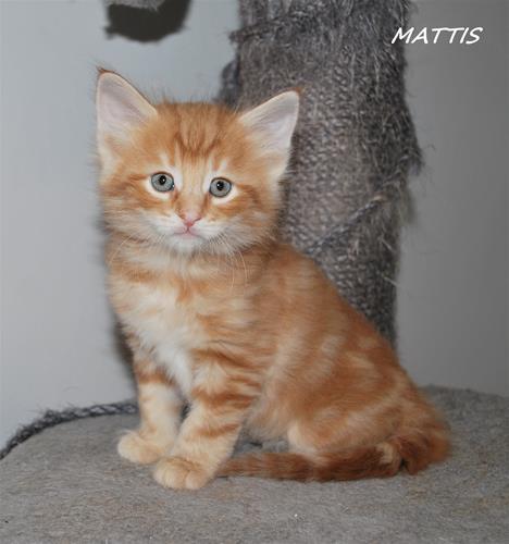 Mattis 6v