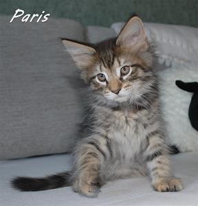 Paris 9v a