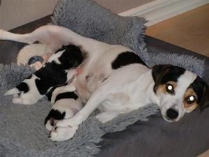 Elvira och hennes små sötnosar!