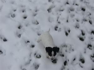 Gina ute i snön, 7 v!