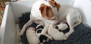 Sunni och nyfödd ökull