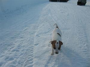 Ute i snön!