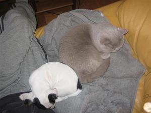 Egon myser med katten!