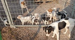 Hundar ute i hundgården