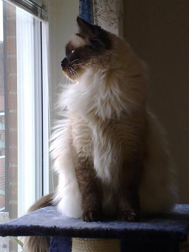Zingo, 3 år