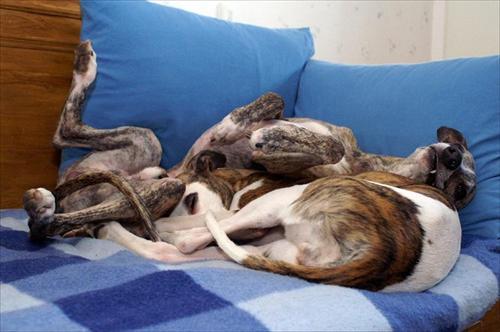 Birk och Frida i soffan