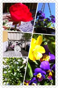K7 Blommor collage