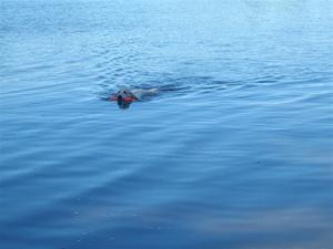 smart.simmar