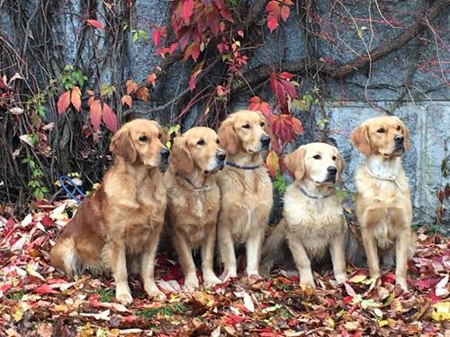 Hundar9