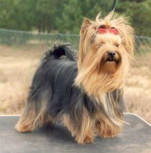 RLD N, LP I SE VCH Footprints First and Forever, Greger, född 2000. Min första viltspårhund. Greger lämnade jordelivet 2015, nästan 15 år gammal.