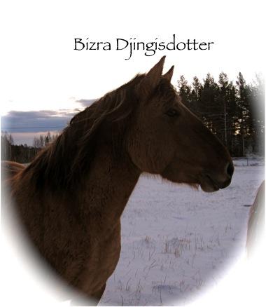 Bizra3