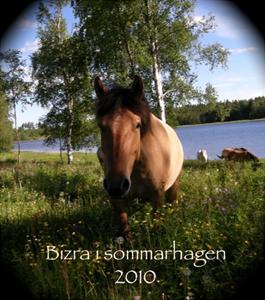 Bizra1