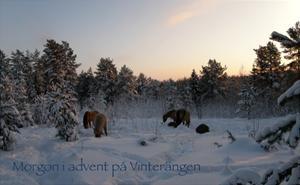 Vinterängen
