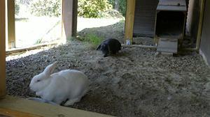 Kaninernas utebur