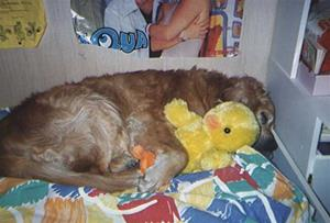 Ricco i Kri säng