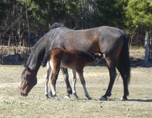 Gabby med sin son andy