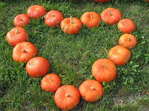 pumpkin-1083103_1920