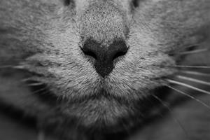 cat-1209320_1920