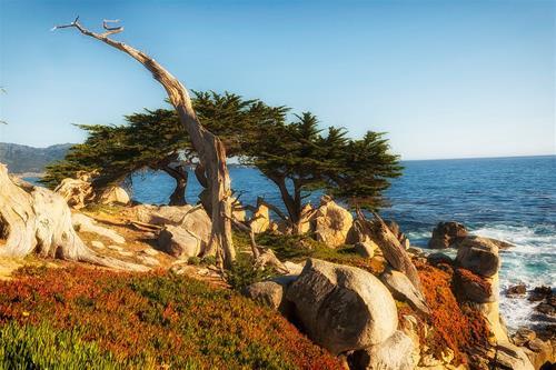cypress-tree-849648_1280