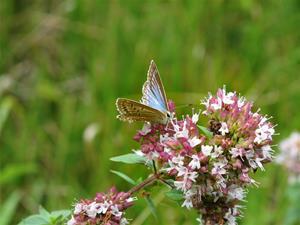 butterfly-363280_1920