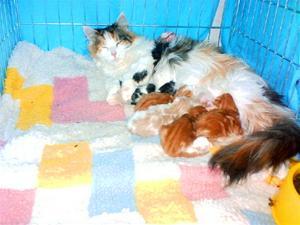 Martins katt+B-kullen 008