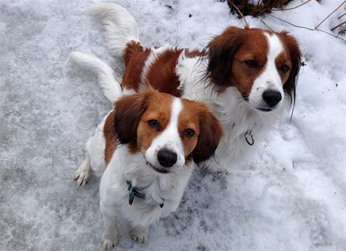 Superior-Alvin och Flora